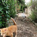 Maia Und die Katze