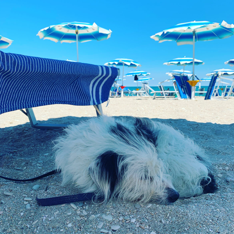 Maia sulla spiaggia di Sant'Egidio
