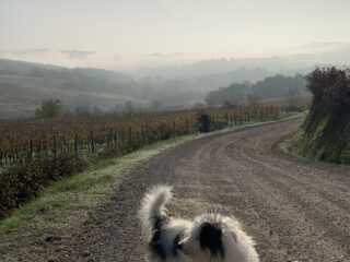 Maia sulla Via Francigena