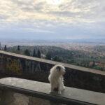 Maia und der Blick von Fiesole