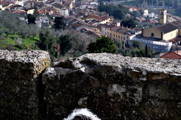 Maia alla Rocca di Carmignano
