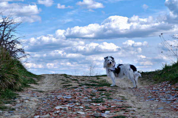 Maia e le nuvole