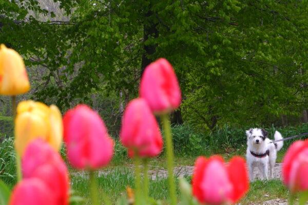 Un fiore in mezzo ai fiori