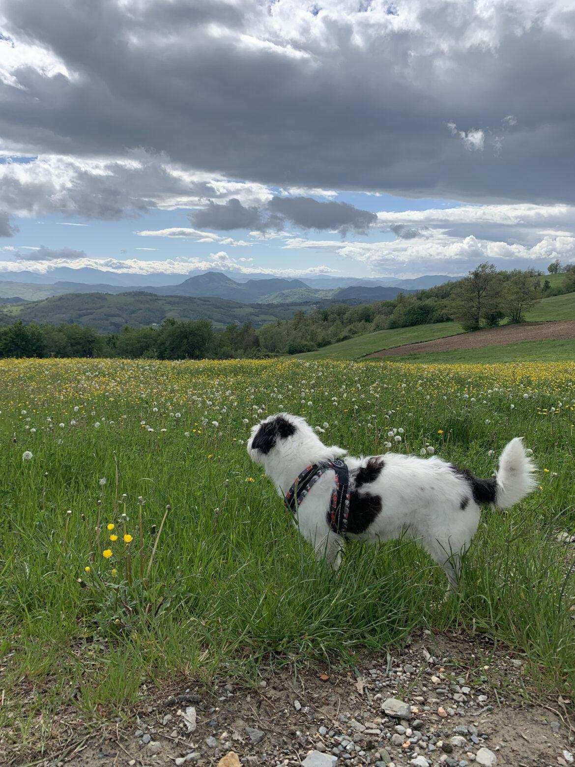 Maia e il Monte Cimone in lontananza