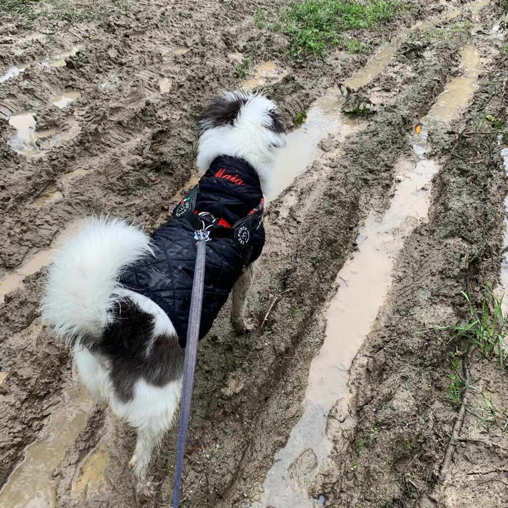 Maia e il fango