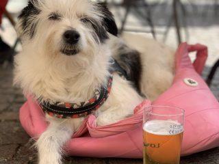 Maia e la birra d'arrivo a Sarzana