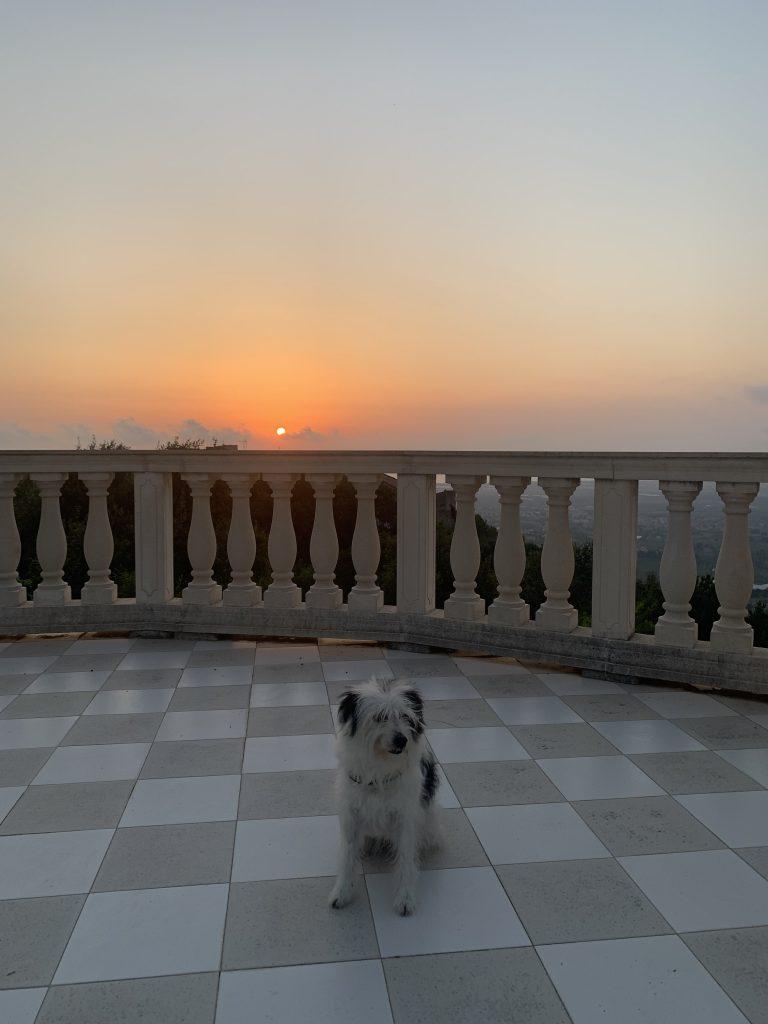 Maia sulla nostra terrazza con tramonto